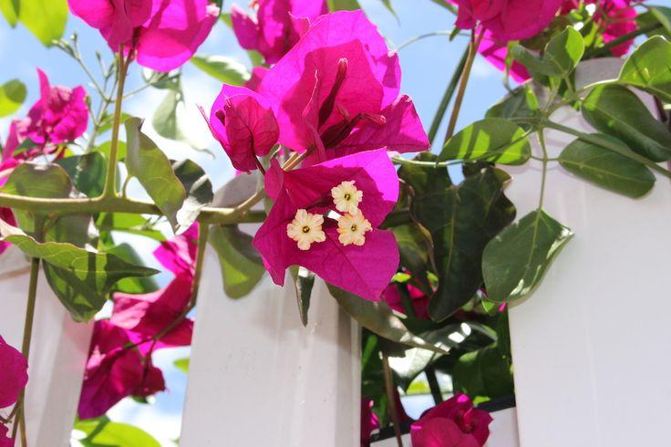 Flowers in Gran Canaria