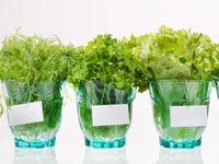 1st Herb Garden Tips