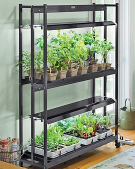 Indoor Vegetable Garden Ideas screen shot 2015 03 26 at 15815 pm Grow Lettuce Indoors Sunroom You Can Do This In An Apartment