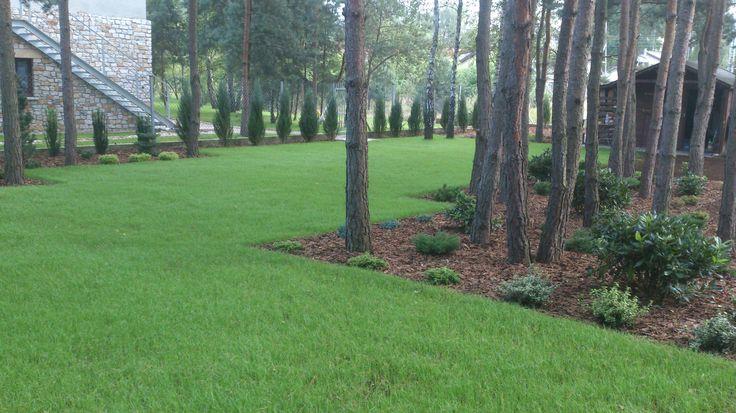 Trawnik siany. Zdjęcie ok. miesiąc po wysianiu nasion.