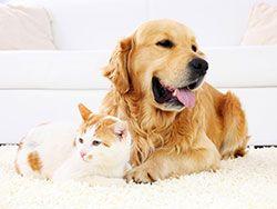 Best Air Purifier For Dog Dander