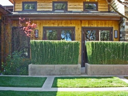 Privacy plants snake grass - to hide our neighbours house from deck view