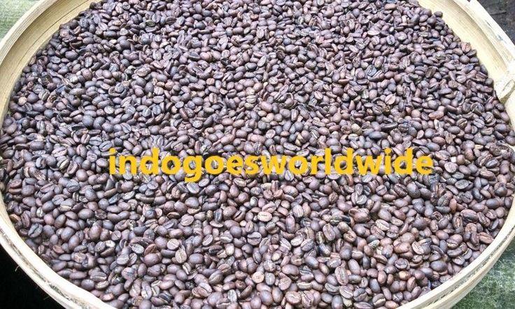 Kopi Luwak BULK Wild Civet Gayo Arabica Coffee ROASTED