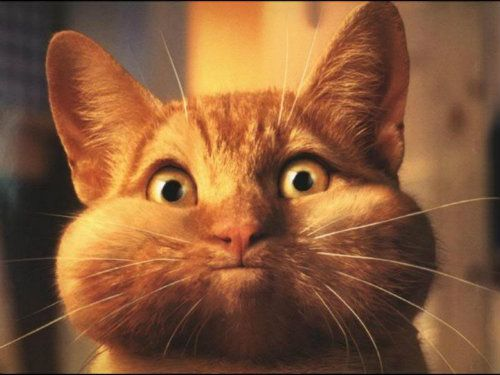 STOP THE FIGHT - DAMN MOUTH GUARD IS NOT IN RIGHT!!!!Chubby Cheek, Funny Kitty, Happy Birthday, Orange Cat, Funny Pics, Funny Pictures, Deep Breath, Silly Pictures, Silly Cat