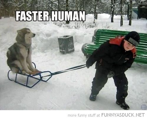 This is exactly what my sled dogs would do
