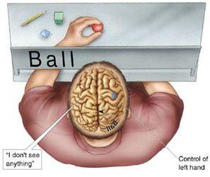 Résultats de recherche d'images pour «left hand control in the brain»
