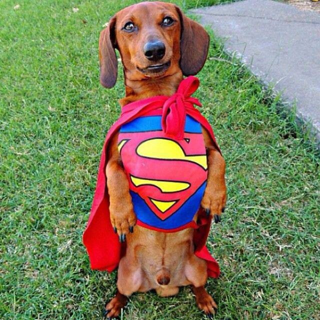 13 best Wiener Dog Costumes images on Pinterest