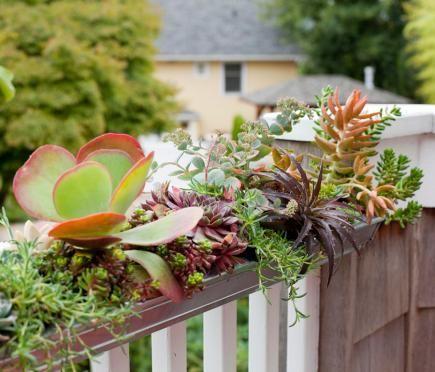gutter window box garden 1