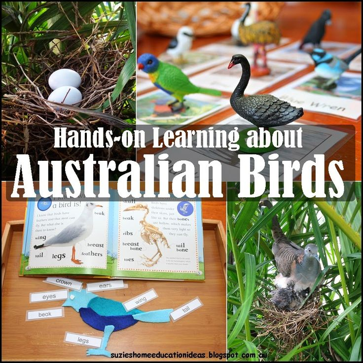 Suzie's Home Education Ideas: Hands-on learning about Australian Birds
