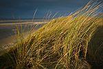 Sanddüne mit Strandhafer (Ammophila)