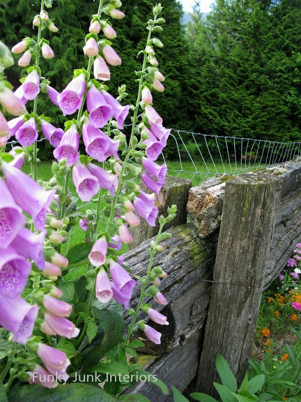How to plant low cost, low upkeep 'forever flowering flowerbeds'...