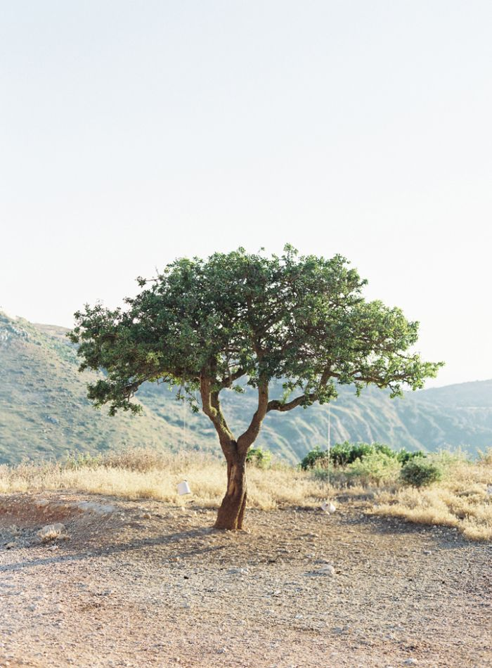 Lone Olive Tree in Kefalonia Greece   photography by http://www.victoriaphippsphotography.co.uk/