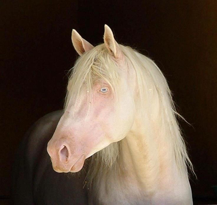 Breath taking | Albino horses | Pinterest | Horse