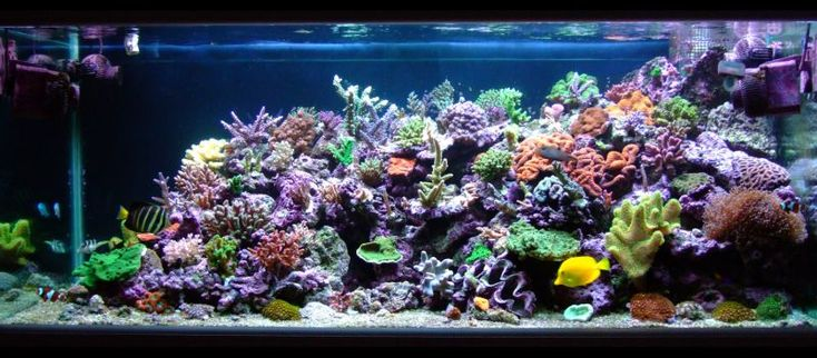 Best tanks from around the world. - Reef Central Online Community
