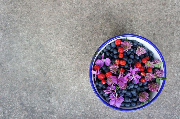Blueberries. Kemiönsaari 2013.