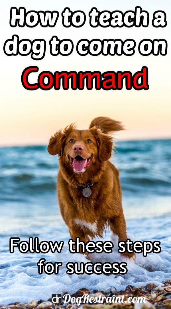 How To Teach A Dog To Come Without Treats Dog Training Training