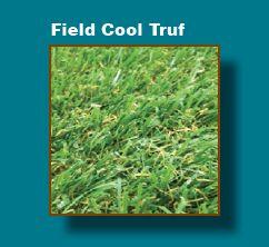 http://www.newturf.com.au/products/grasses.html