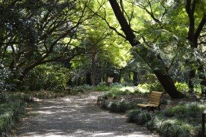 Jardín Nacional de Shinjuku Gyoen en Tokio.