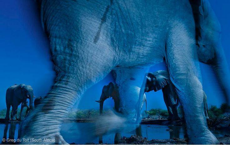 BBC Wildlife Awards 2013 - GRAND TITLE WINNER - ANIMAL PORTRAITS: 'Essence of elephants' by Greg du Toit
