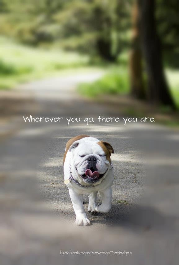 BULLDOG: Athens Ga, My Best Friends, English Bulldogs, Bulldawg, Deep Thoughts, I Want You, Baby Bullies, Truths, Seuss Quotes