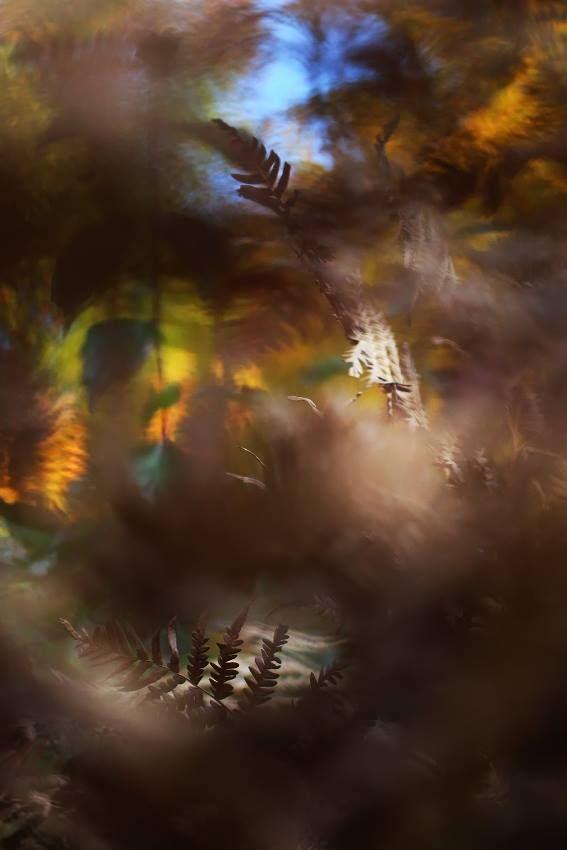 Zdjęcie użytkownika Joanna Antosik  Fotografia przyrodnicza i krajoznawcza.