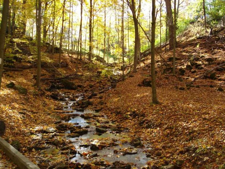 The Dundas Valley in Hamilton is one of southern Ontario's most spectacular natural treasures. Highlights of the 1,200-hectare conservation area include lush Carolinian forests, colourful meadows, cold-water streams, stunning geological formations and an array of rare plants, birds and wildlife.