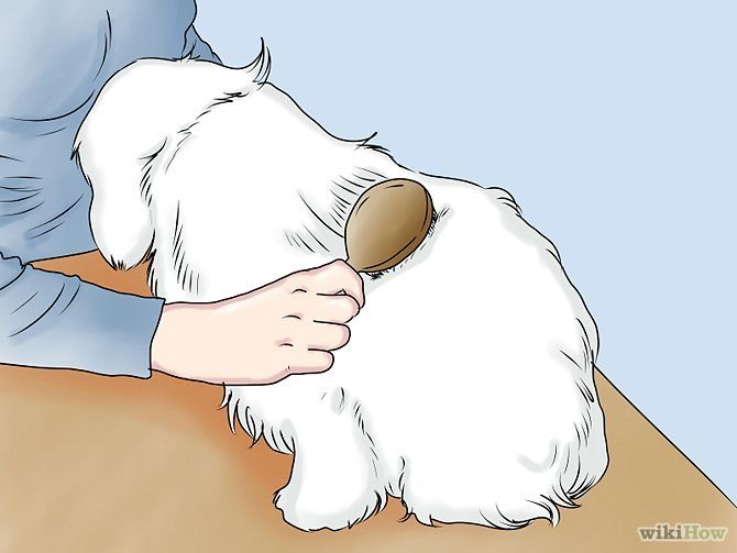 how to take care of a maltese puppy