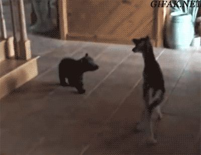 Gifak.net. gifak-net. Gifs. Animated gif. Lol gifs. Funny gifs. Cat gifs. New gifs