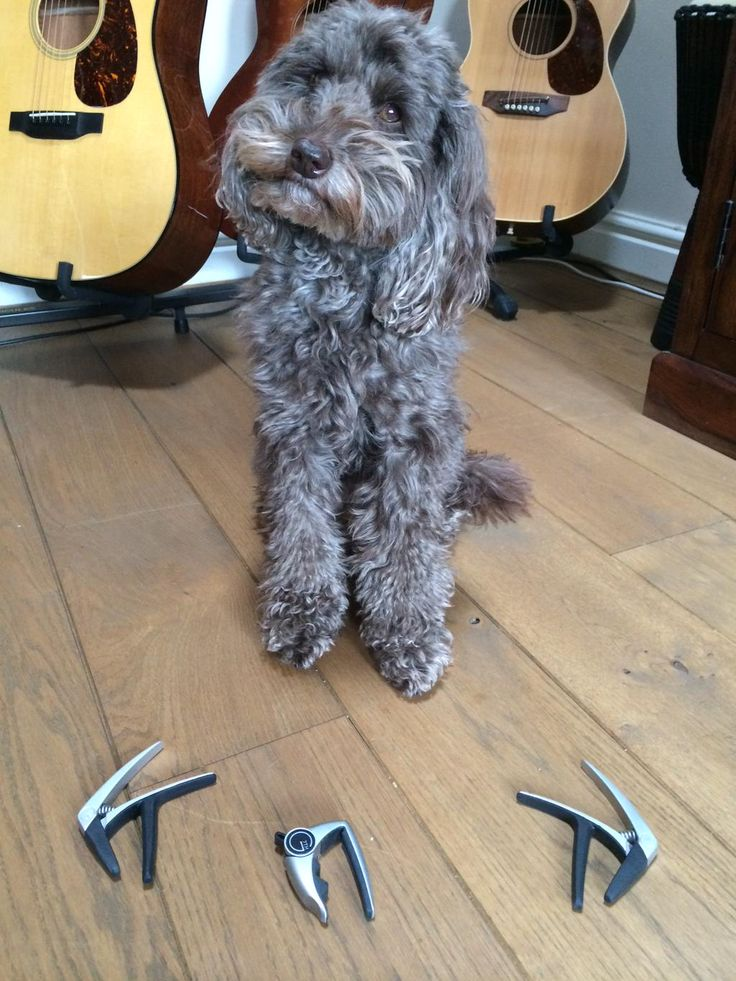 """@G7thCapos How about """"Dogs With Capos"""" @WestsideMI @westside_uk"""