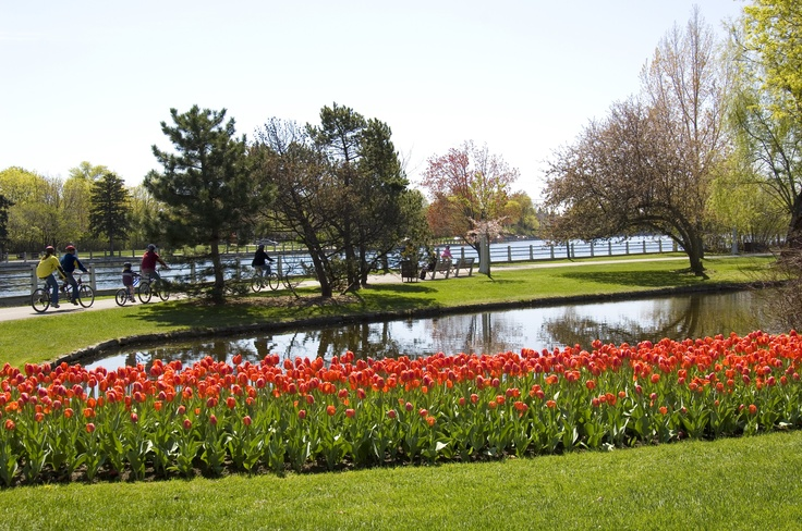 Tulips in bloom near the Rideau Canal during the Canadian Tulip Festival, every May in Ottawa. For more information on the Tulip Festival visit http://www.ottawatourism.ca/en/visitors/top-attractions/canadian-tulip-festival
