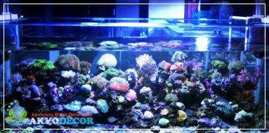 Aquarium Air Laut Sebagai Obat Stres dan Bosan,Jual Aquarium Air Laut,Jual Perlengkapan Aquascape Murah,