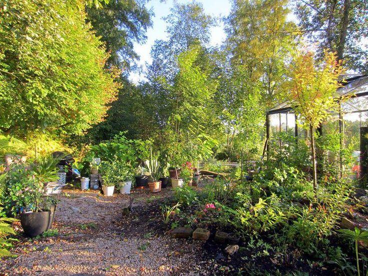 The greenhouse garden