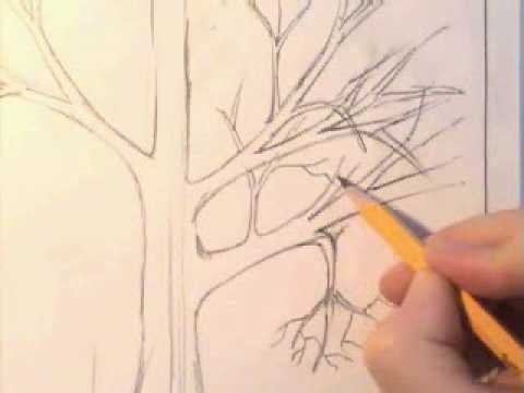How to draw a tree. I find these tutorials really easy and helpful but I just cant design one without a tutorial!