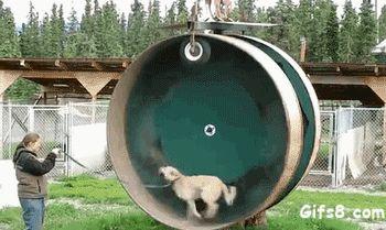 dog-hamster