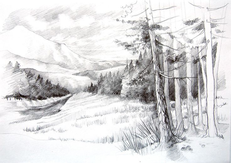 Clearing in forest - pencil drawing by #minkulul