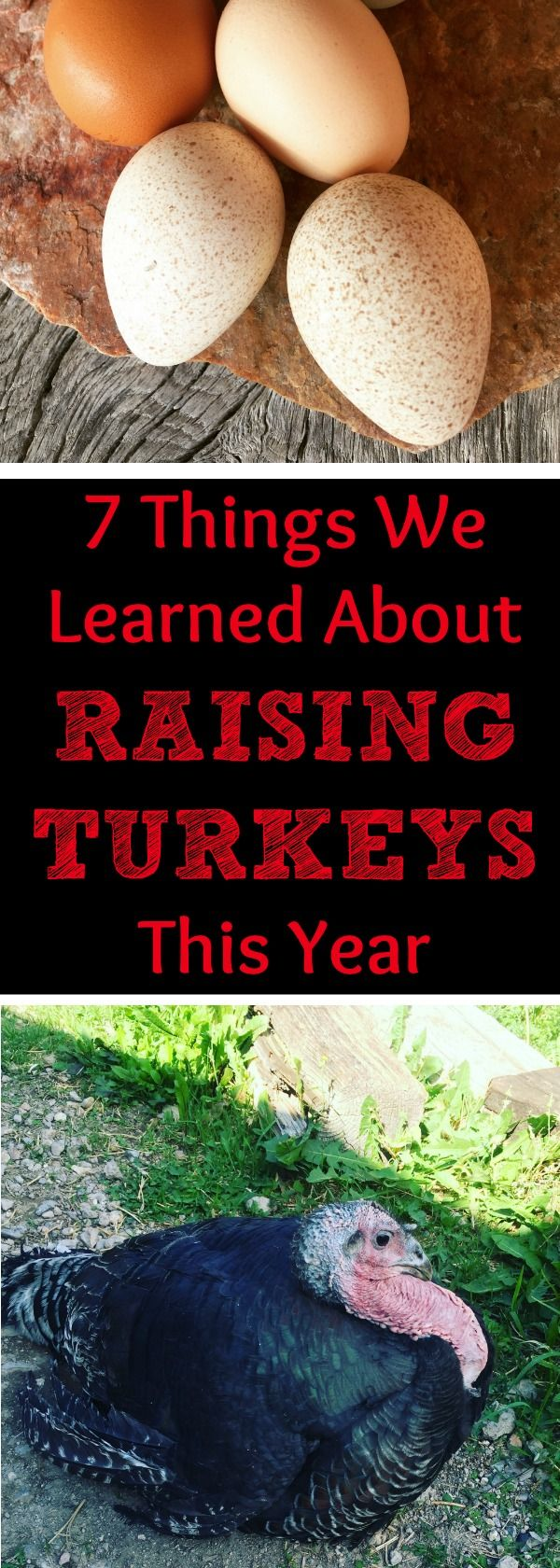 Have you ever just jumped into something because you thought it was easy? Well, here are seven REALLY important things we learned about raising turkeys this year!