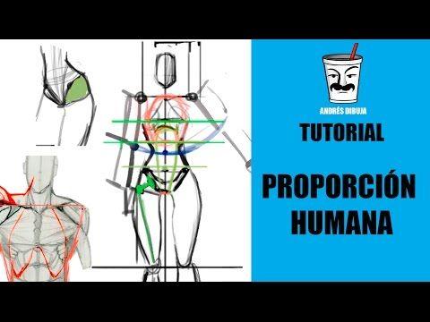 Las PROPORCIONES del cuerpo humano + Anatomía TUTORIAL DE DIBUJO - YouTube