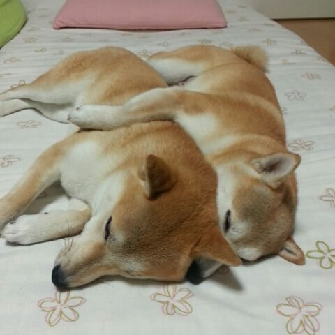 Awww.  I want another one!                From PetSmile  >>see more http://pet-smile.net/?pinterest
