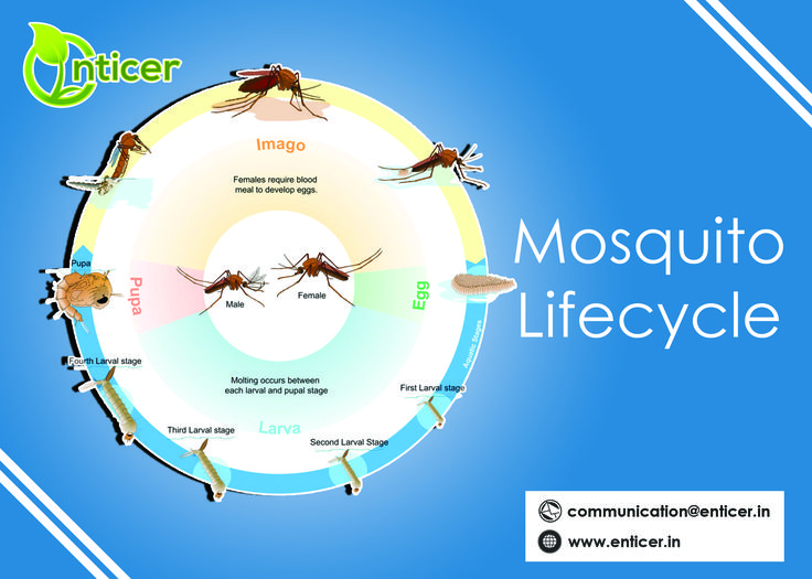 know about #mosquito  #enticergroups #organicproduct #MakeInIndia