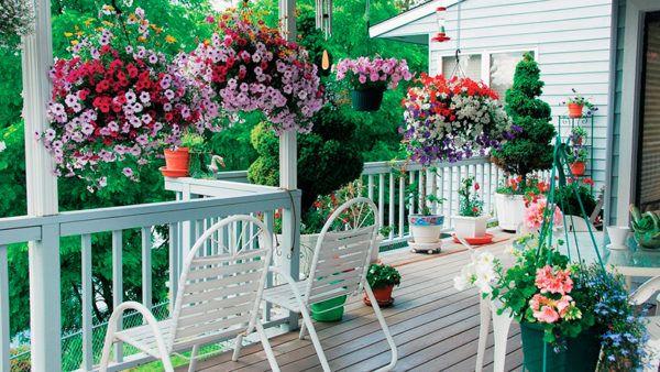 Цветы на лоджии, балконе или веранде – отличный способ попробовать себя в роли цветовода