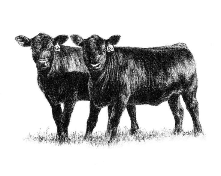 Show Steer Graphics Heifers 2 Heifers Standing Side