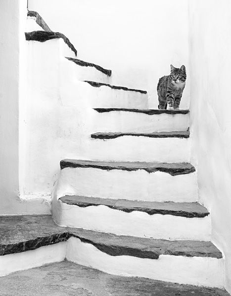 Stairs with cat