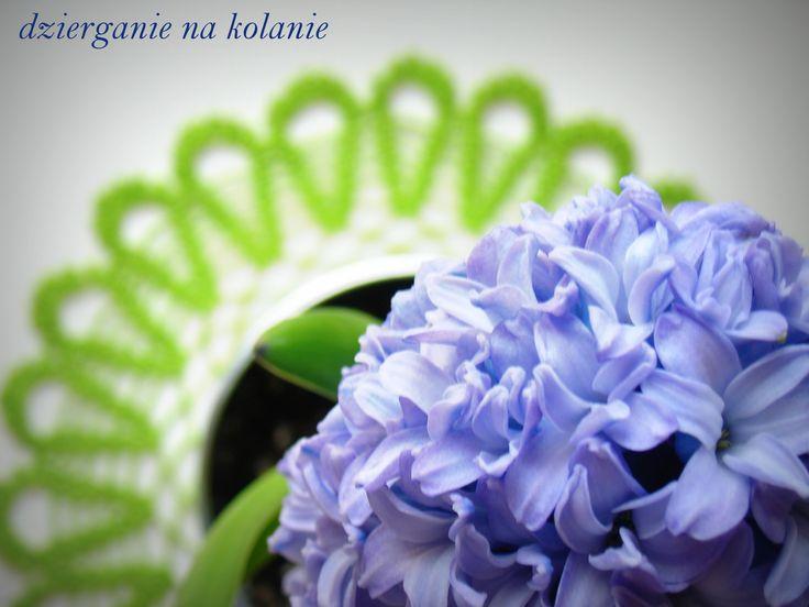 Serwetka 30 cm + hiacynt / Crocheted Doily and hyacinth. https://www.facebook.com/dzierganienakolanie?ref=hl