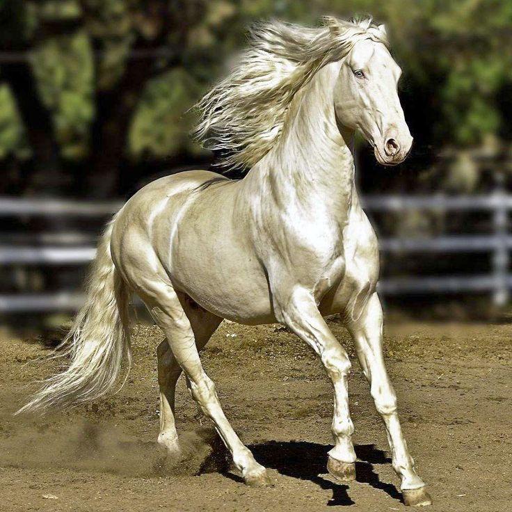 Die schönsten und exotischsten Pferdemäntel der Welt – alles beliebt   – model horse ref