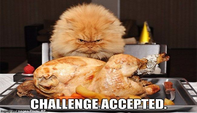 12 Funny Thanksgiving Memes That Capture Our Feelings For That Holiday Angry Cat Funny Thanksgiving Memes Funny Thanksgiving Pictures