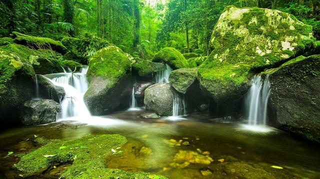 O'reilly's Rainforest Waterfall, Lamington National park #Australia