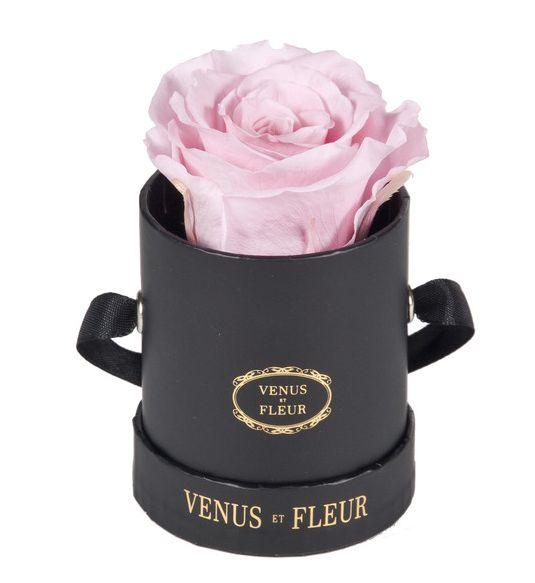 29 best venus et fluer images on pinterest | venus, flower and