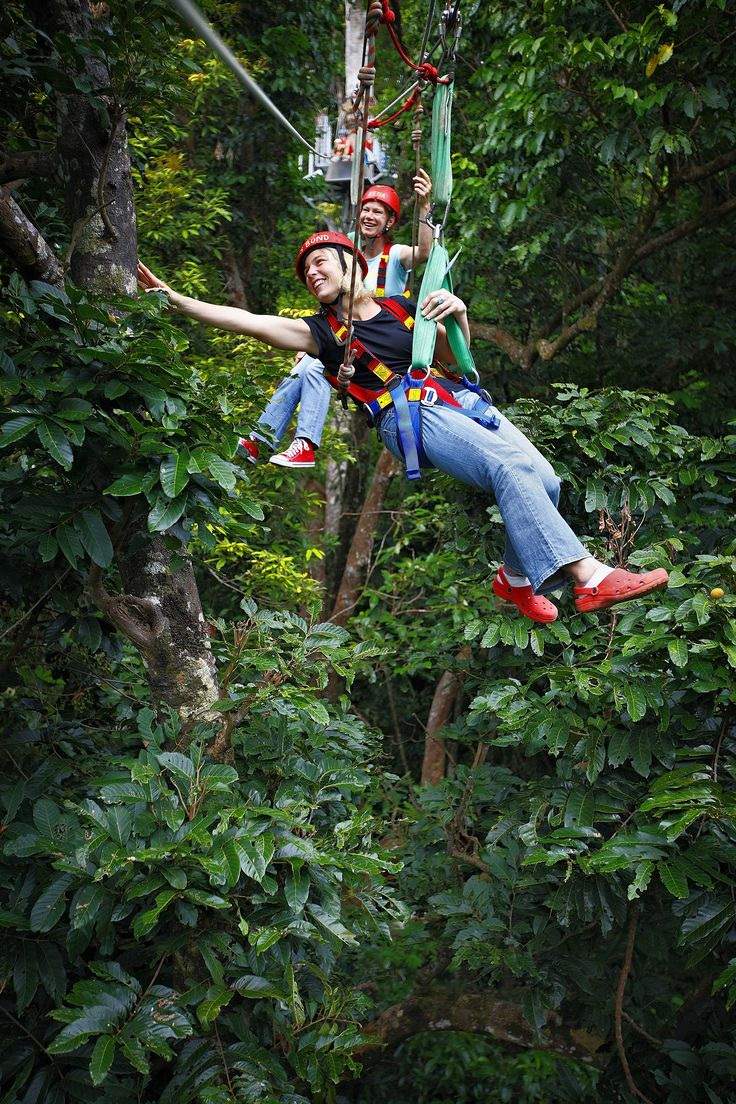 Jungle Surfing Canopy Tours, borders the Daintree National Park, 2.5 hours north of Cairns, Queensland, Australia
