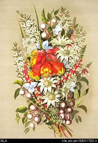 Rowan, Ellis, 1848-1922.  A bunch of Australian wild flowers [picture]  Sydney : Town & Country Journal, Dec. 22 1888 (Leeds : Alf. Cooke) 1 print : chromolithograph ; 59 x 39.7 cm.  From National Library of Australia collection  http://nla.gov.au/nla.pic-an10641702  nla.pic-an10641702