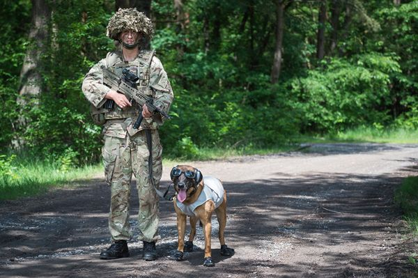 Military working dogs and handlers test latest kit in live fire scenarios - British Army Website